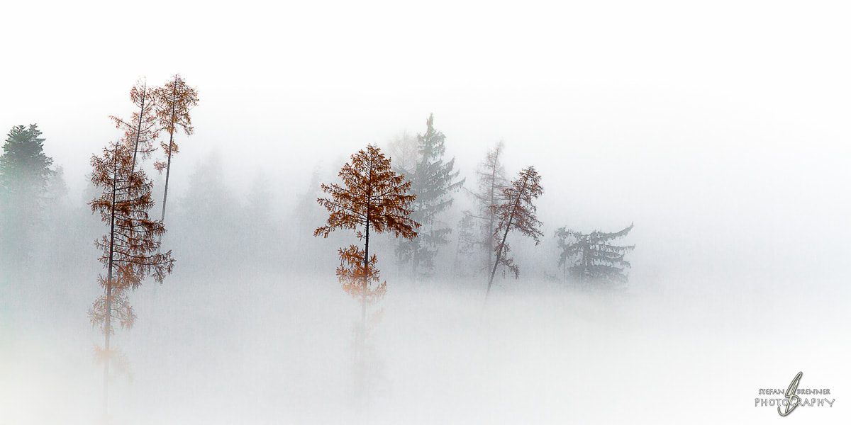 Photograph Tree Tops Breaking Through the Sea of Fog by Stefan Brenner on 500px