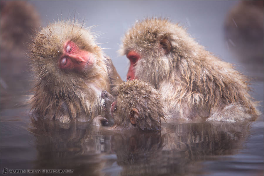 Photograph Family by Martin Bailey on 500px