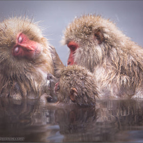 Family by Martin Bailey (martinbailey)) on 500px.com