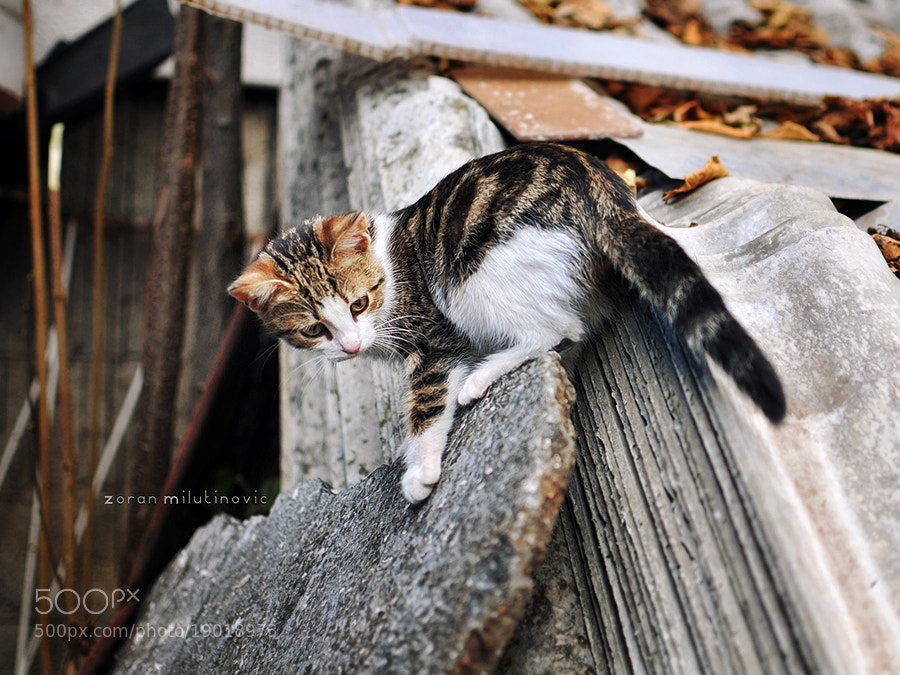 Photograph Like a squirrel by Zoran Milutinovic on 500px