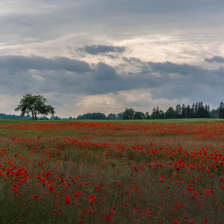Poppies, Canon EOS 5D, Canon EF 35-105mm f/3.5-4.5