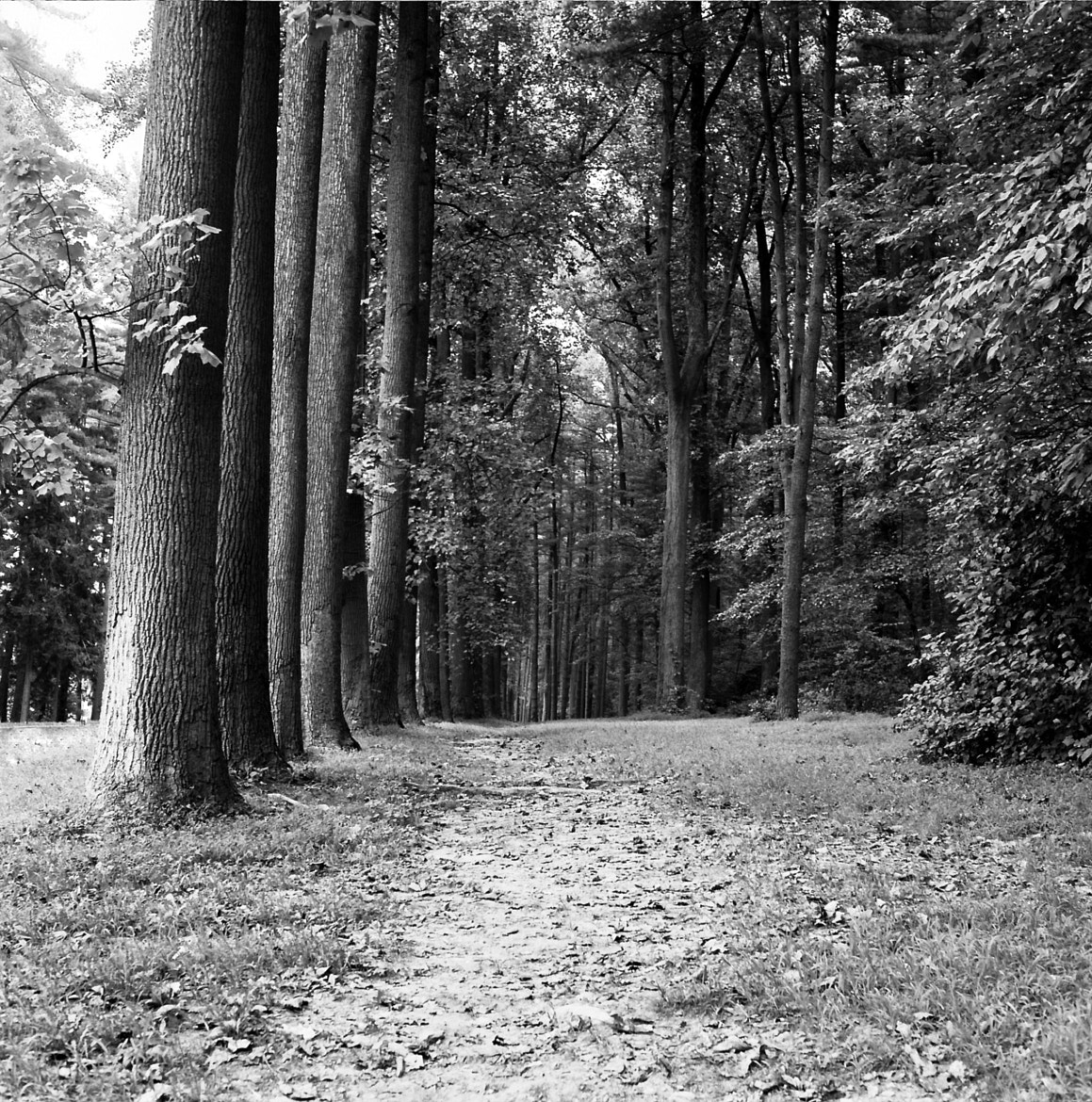 Photograph A Walk In The Woods by ThisIsAJT  on 500px