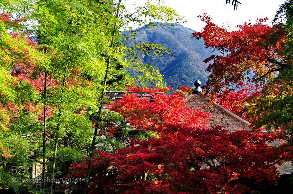"Photograph ★ ""Hakone Museum of Art"" Autumn in Hakone -2 by KEN OHSAWA on 500px"