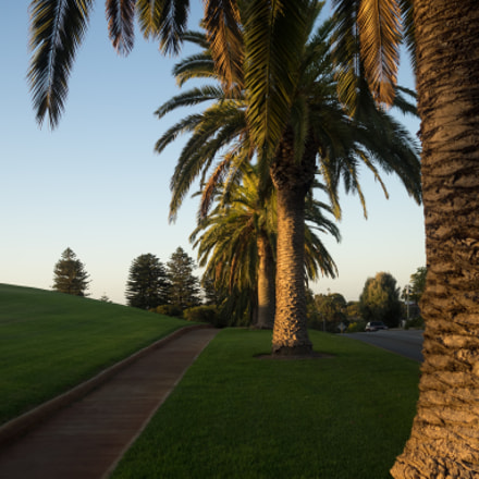 Boulevard of Palms