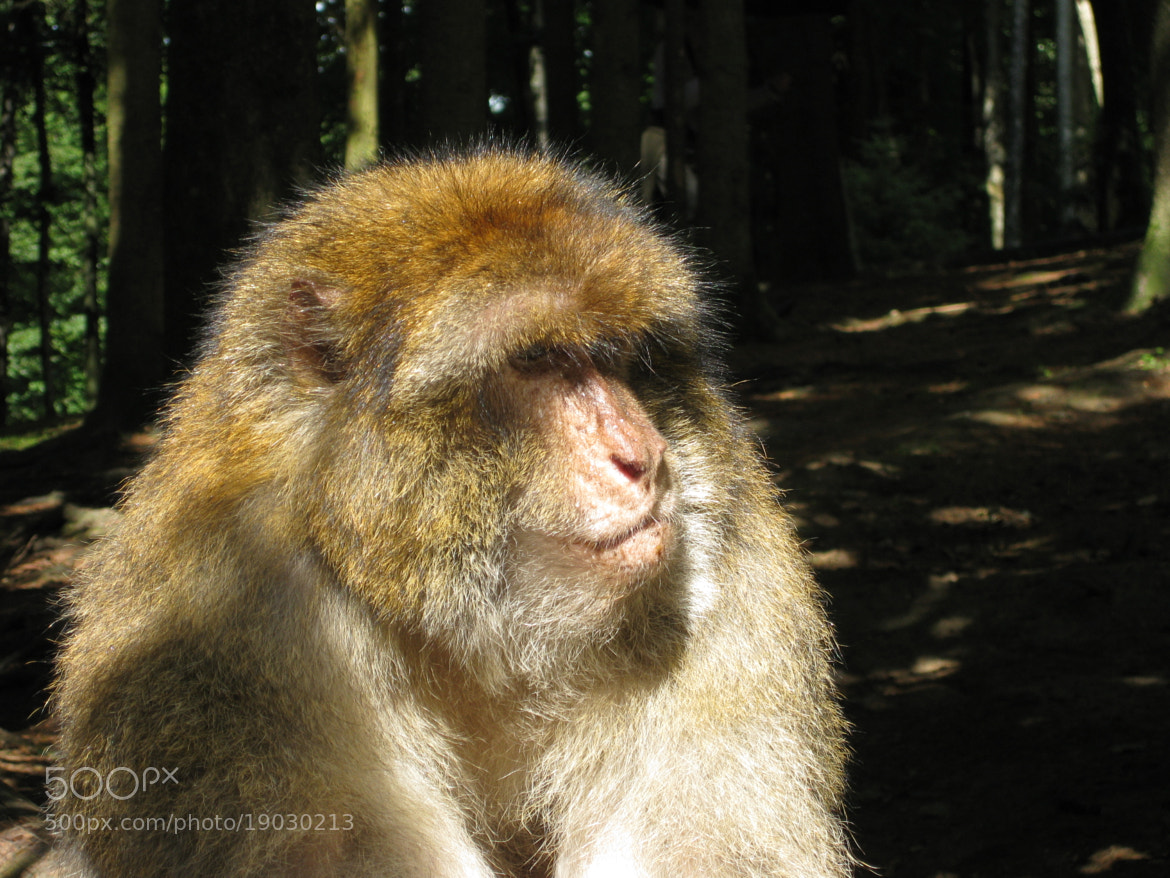 Photograph monkey by Andy Vobiller on 500px