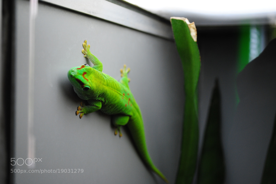 Photograph Gecko? by Andy Vobiller on 500px