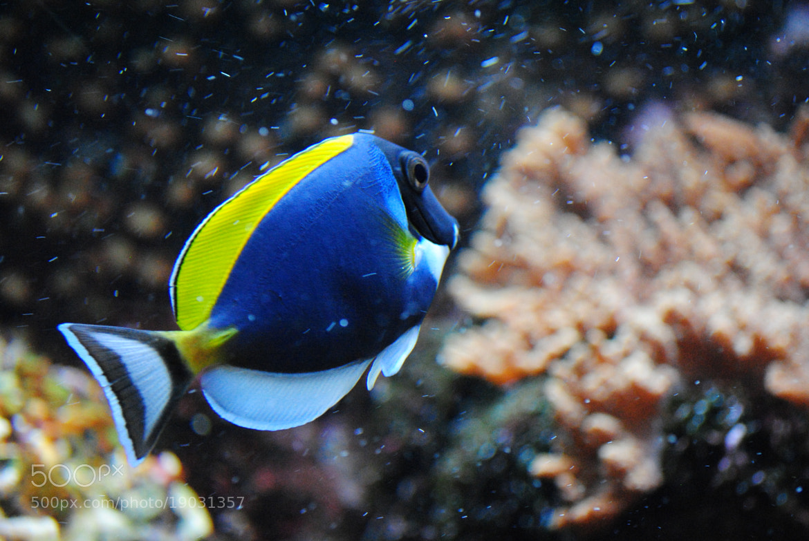 Photograph Nice Fish by Andy Vobiller on 500px