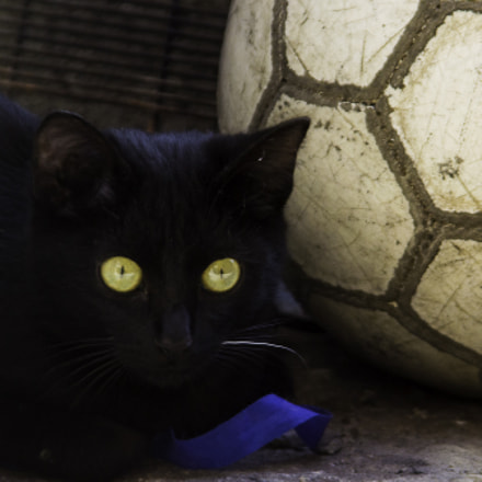 black cat and ball, Nikon D3100, Sigma 28-200mm F3.5-5.6 Compact Aspherical Hyperzoom Macro