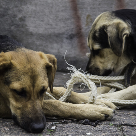 dogs and the rope, Nikon D3100, Sigma 28-200mm F3.5-5.6 Compact Aspherical Hyperzoom Macro
