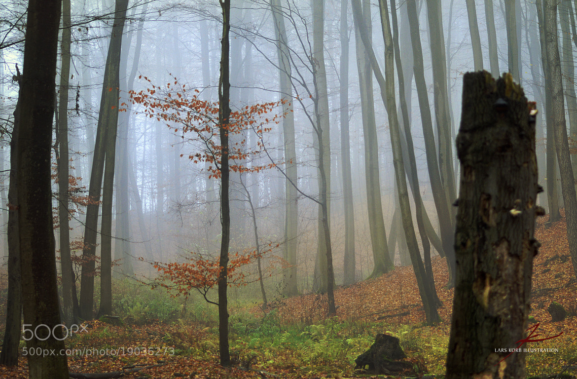 Photograph Misty Forest Inclines by Lars Korb on 500px