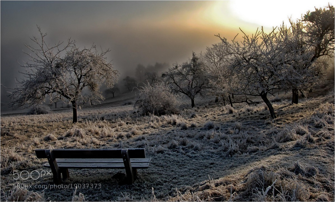 Photograph after a cold night in the early morning by Ulrich Fleischer on 500px