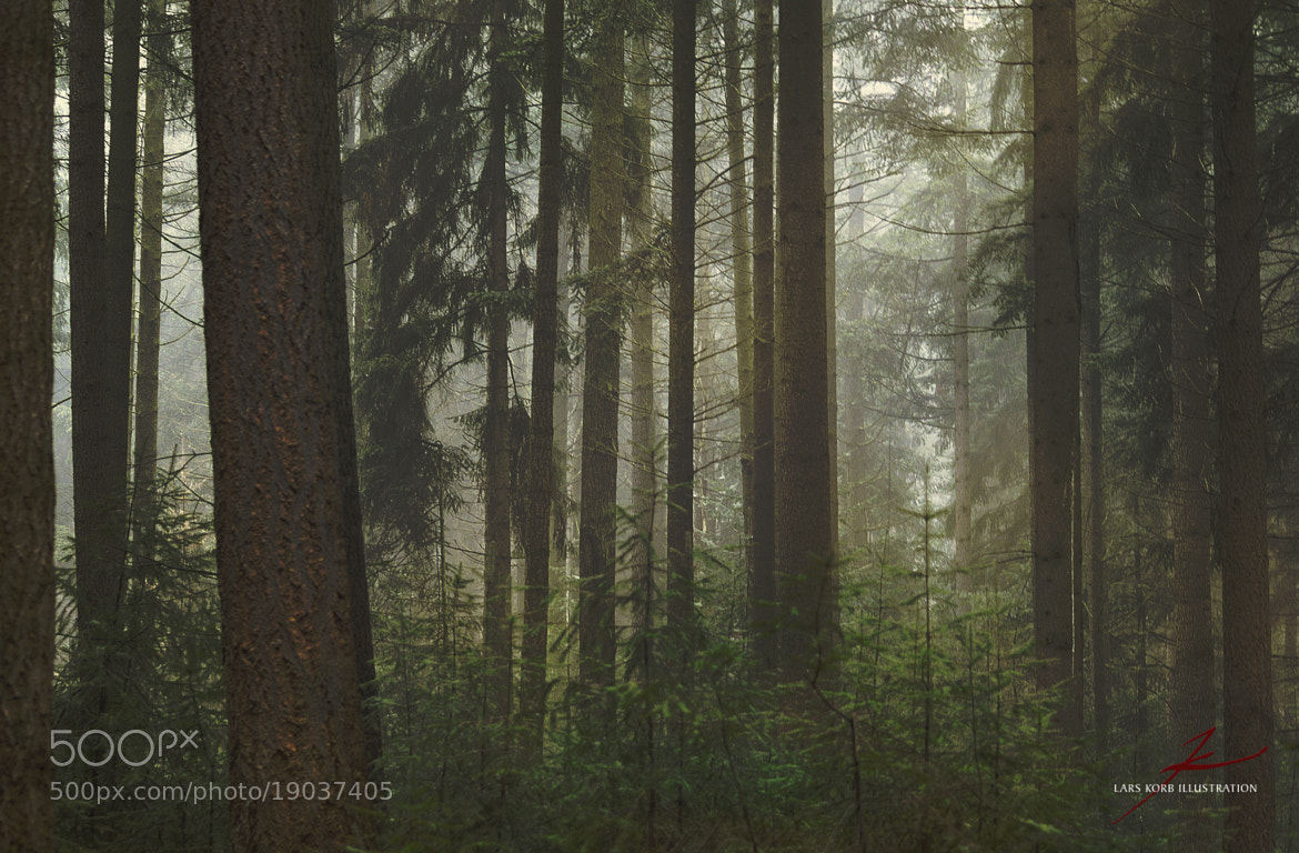 Photograph Needles & Mist by Lars Korb on 500px