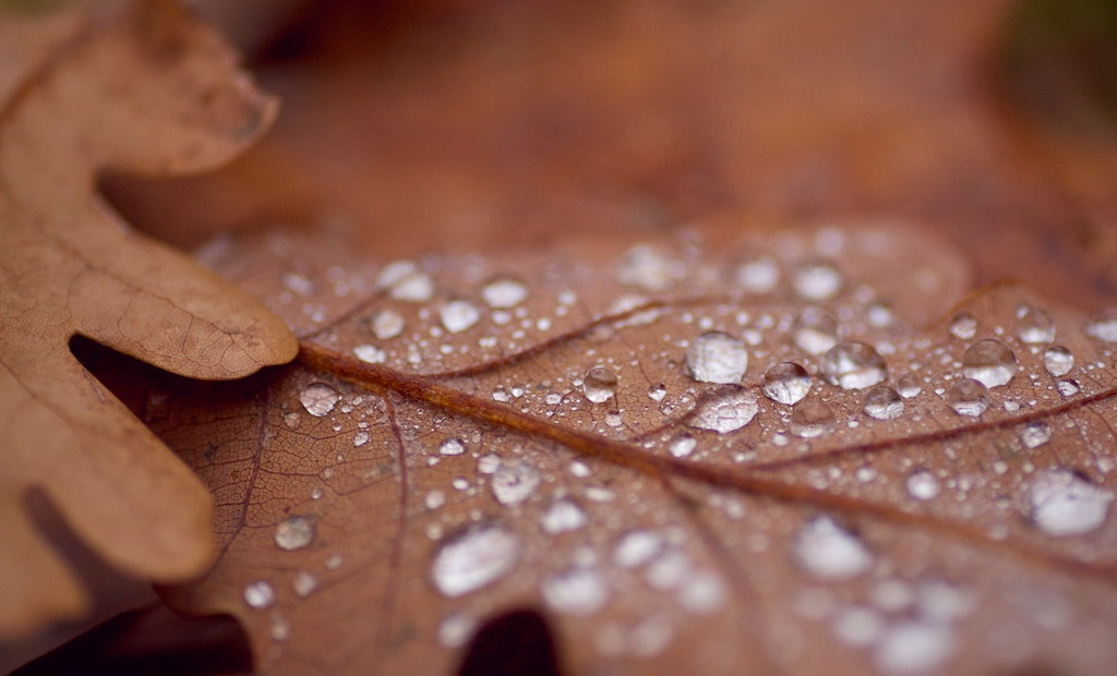 Photograph Autumn leaves by Samu András on 500px