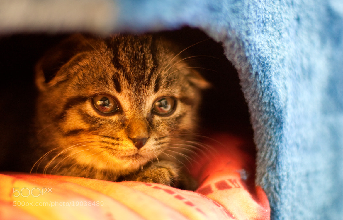 Photograph In cat-tower by Team B&K on 500px