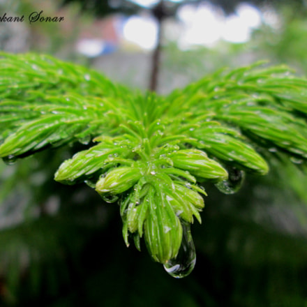 Natures Clicks, Canon POWERSHOT A3400 IS