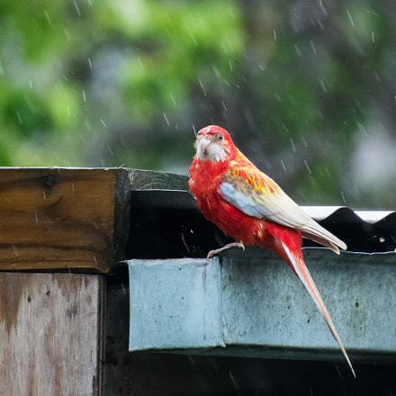 Our bird friend
