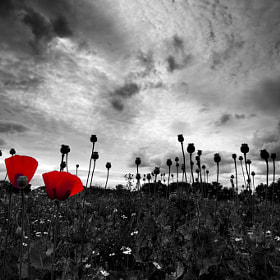 Poppy pop by Mark Tizard (Cutter55)) on 500px.com