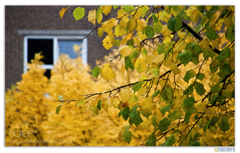 Photograph Autumn by Krishna  Chaitanya on 500px