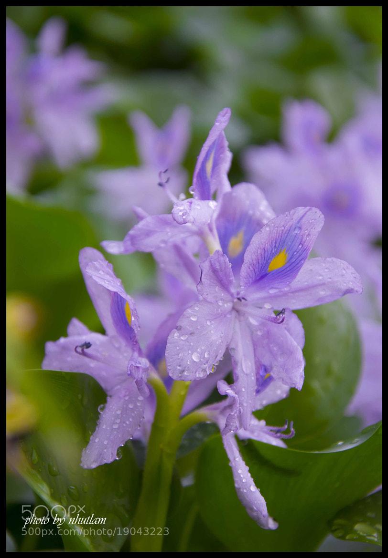 Photograph Flower by Lam Ta Nhut on 500px