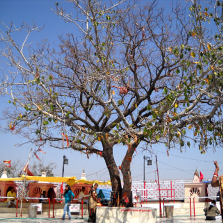 Tree at Holy Place, Nikon COOLPIX L20