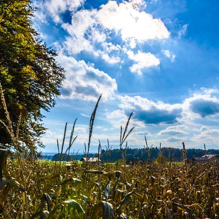 Wheat n' Sky