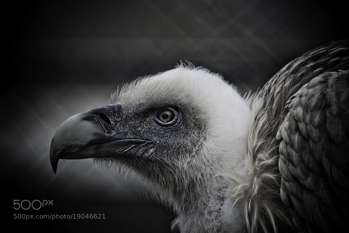 Photograph Caged by Denis Van Linden on 500px