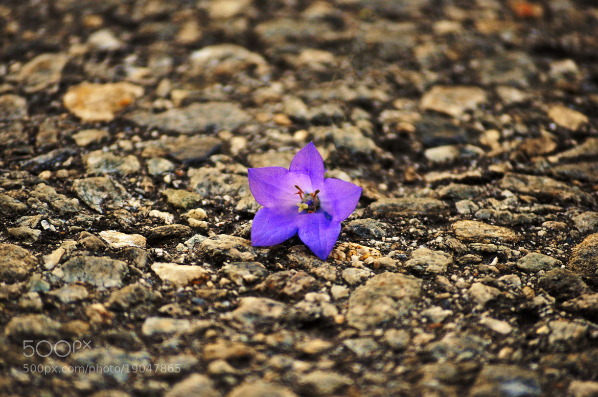 Photograph Last flower by VisionPhotographer  on 500px