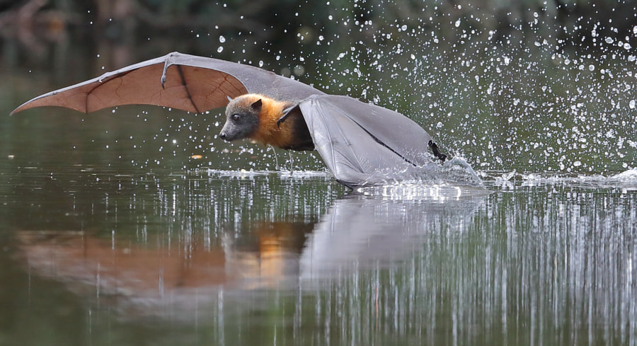 Wing Dip by Michael Cleary on 500px.com