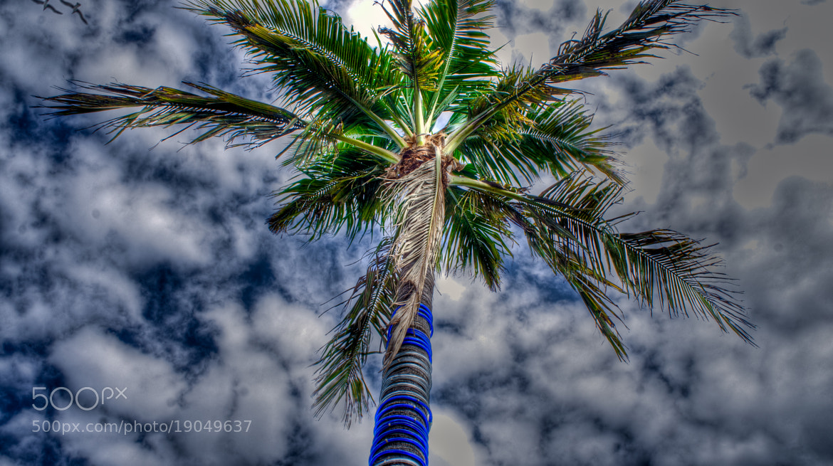 Photograph palm by Andreas Schmid on 500px