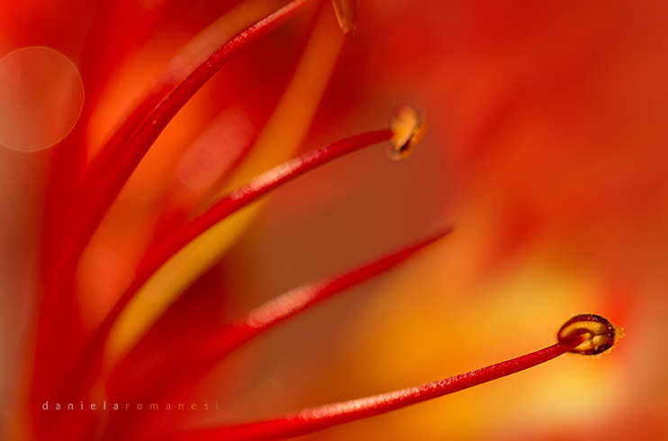Photograph RED by Daniela Romanesi on 500px