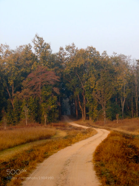 Photograph Into The Woods by Madhav Tiwari on 500px