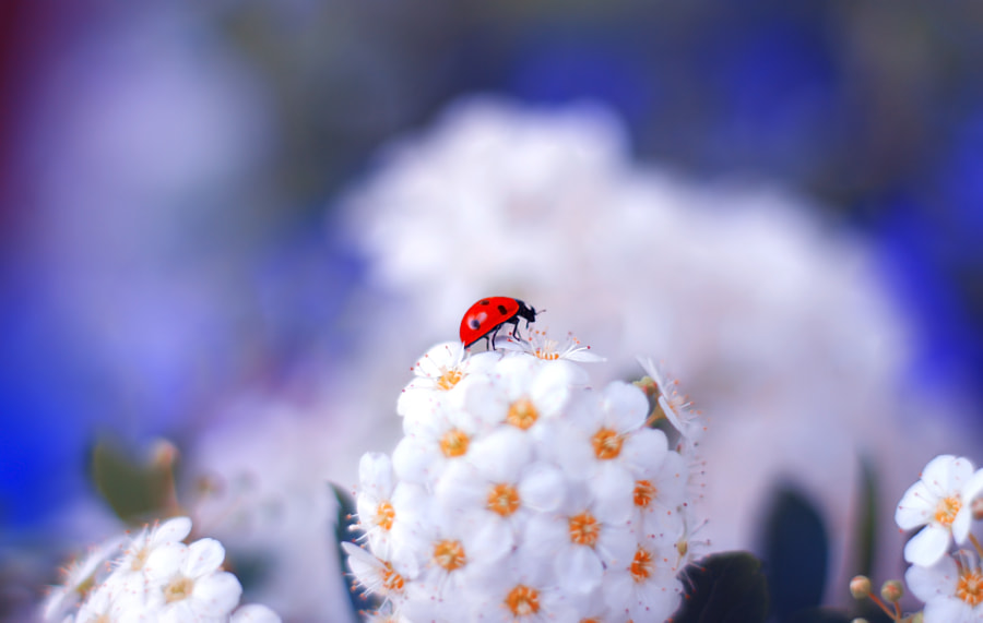 Lady in the Garden de Elena Andreeva sur 500px.com