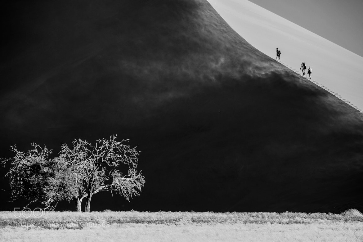 Photograph Going up the Dune.. by Dorothy Brodsky on 500px