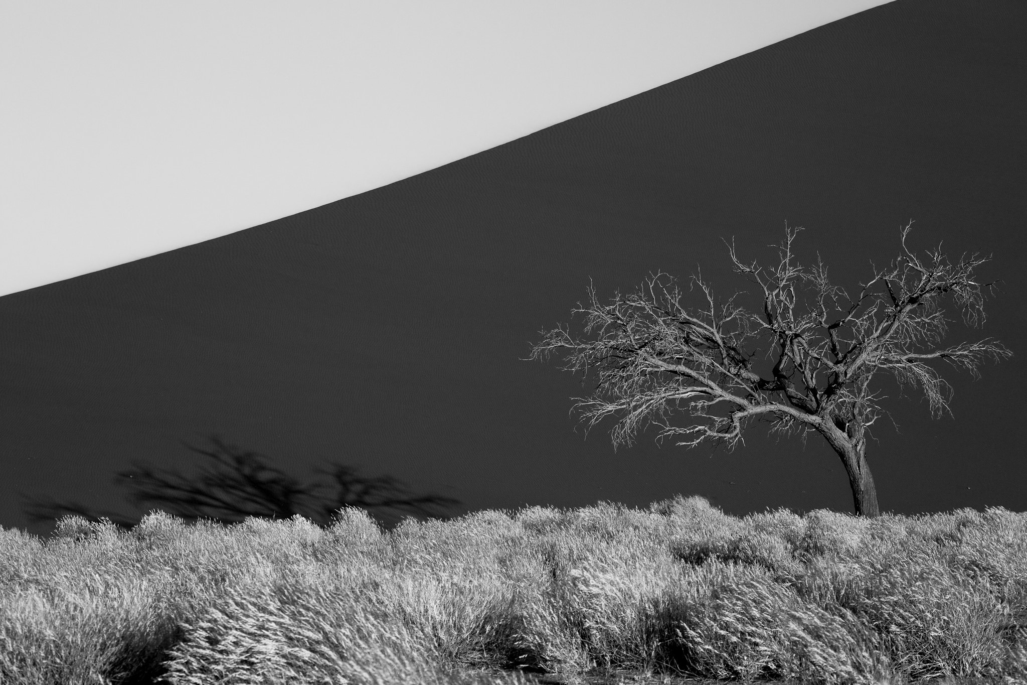 Photograph Dune, Tree & Grass by Dorothy Brodsky on 500px
