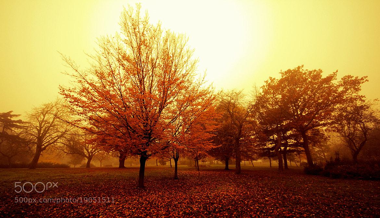 Photograph Autumn Yellow by Emin Kucuk on 500px