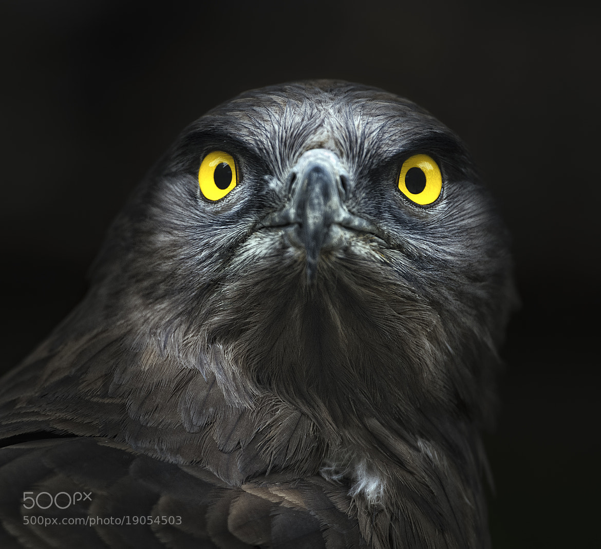 Photograph Hypnosis by jose pesquero on 500px