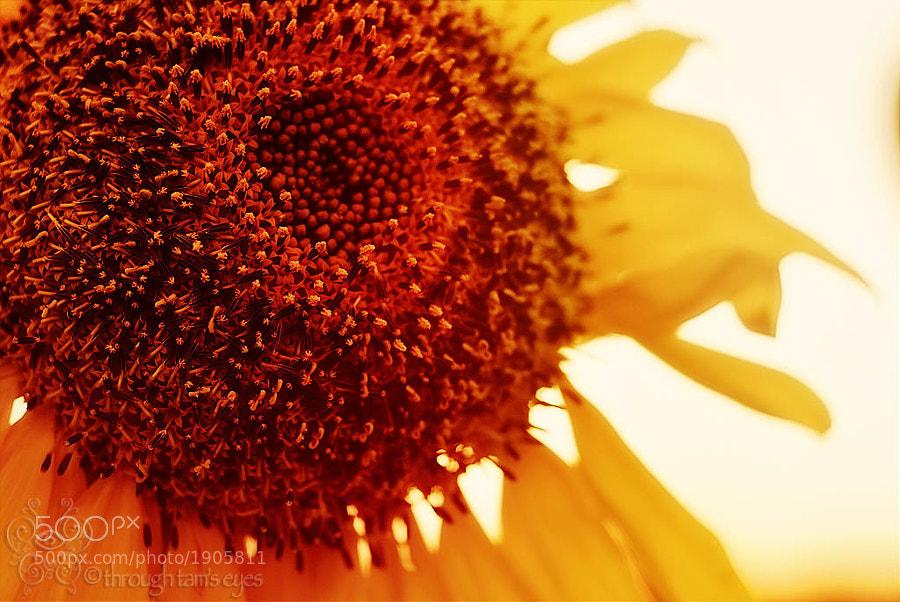 I love sunflowers.  :D