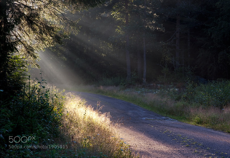Photograph  Sunlight and Fairy Tales by Duvessa Edana on 500px