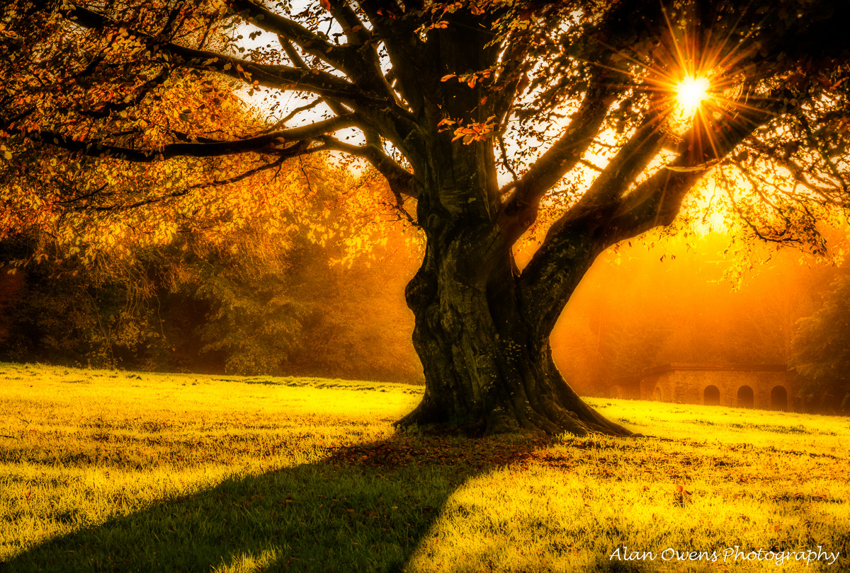 Photograph Warmth by Alan Owens on 500px