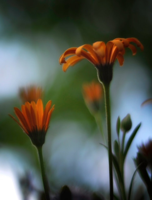 Photograph Radiant by Mike Byers on 500px