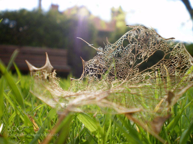 Photograph fragile beauty  by Rachel  Sutherland on 500px