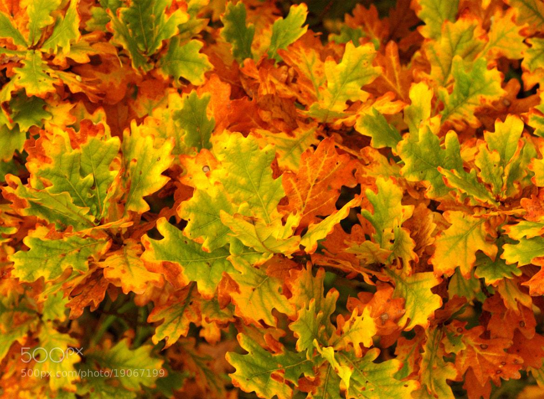 Photograph Autumn Show by Chrissie Barrow on 500px