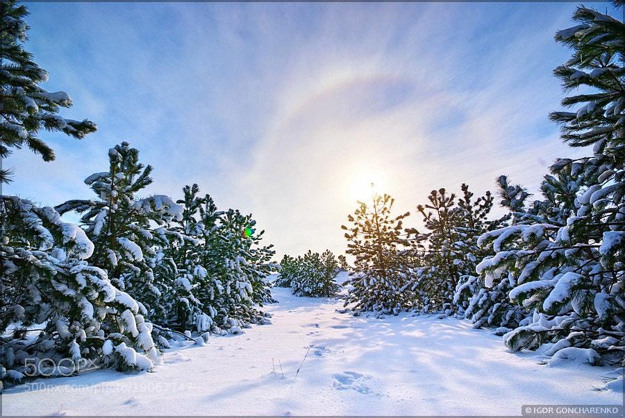 Winter landscape by Igor  Goncharenko (ROZUM)) on 500px.com