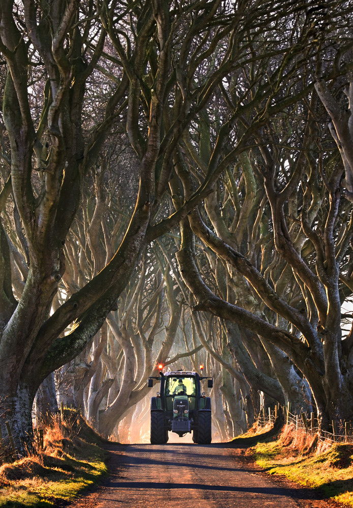 Photograph Dark Hedges by Stephen Emerson on 500px
