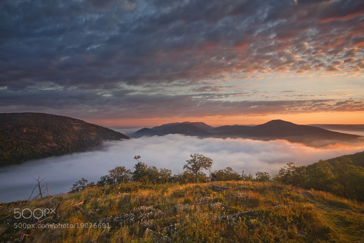 Photograph Above the Fog, Storm King State Park, NY, 2010 by Christopher Wisker on 500px