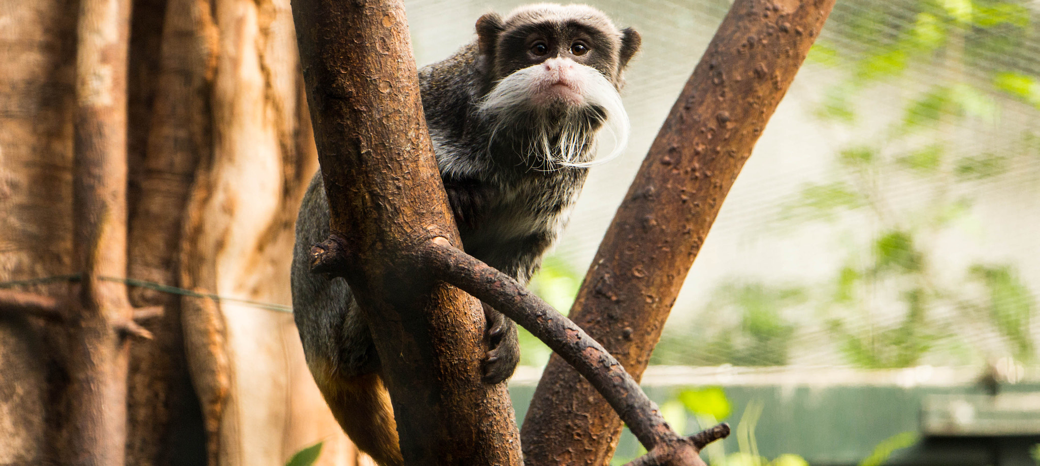 Photograph emperor tamarin by marcgaw  on 500px