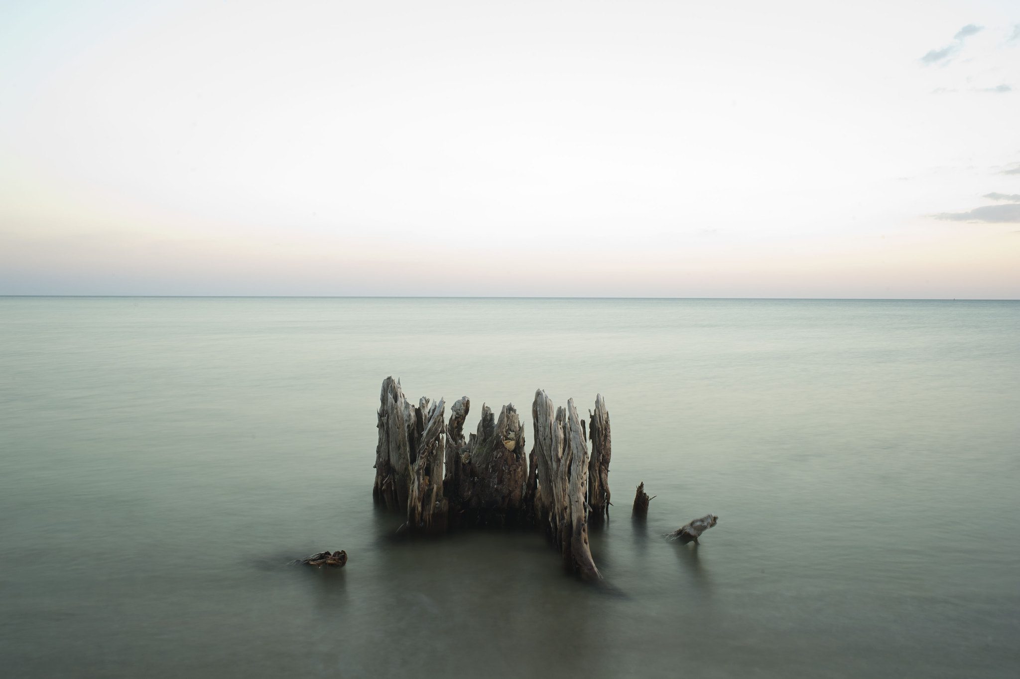 Photograph Sea Trees by Curtis  Baker on 500px
