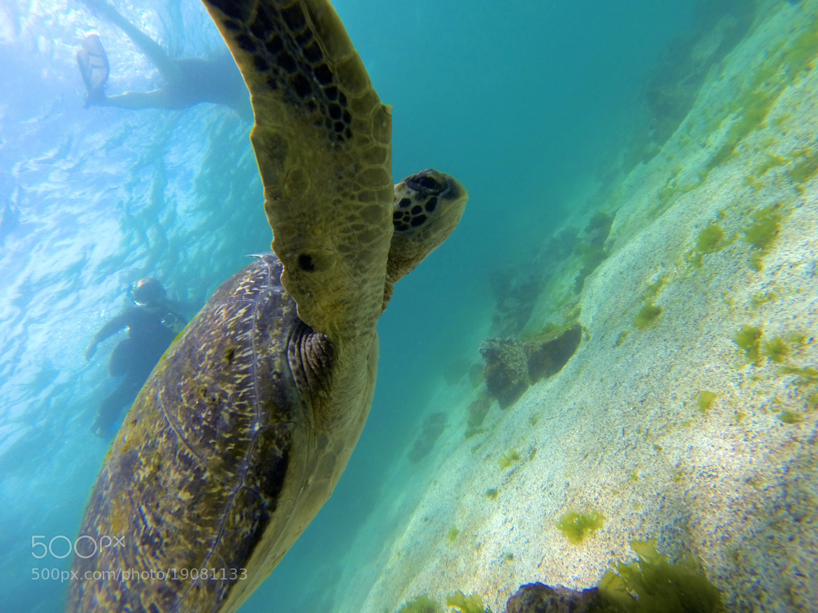 Photograph Swimming with Turtles by Matt Sellars on 500px