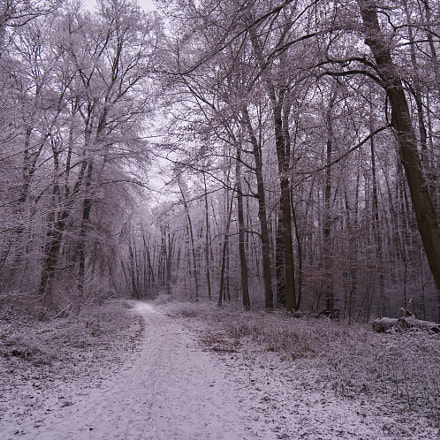 Winter Forest, Sony ILCE-6500, Sony E 10-18mm F4 OSS (SEL1018)