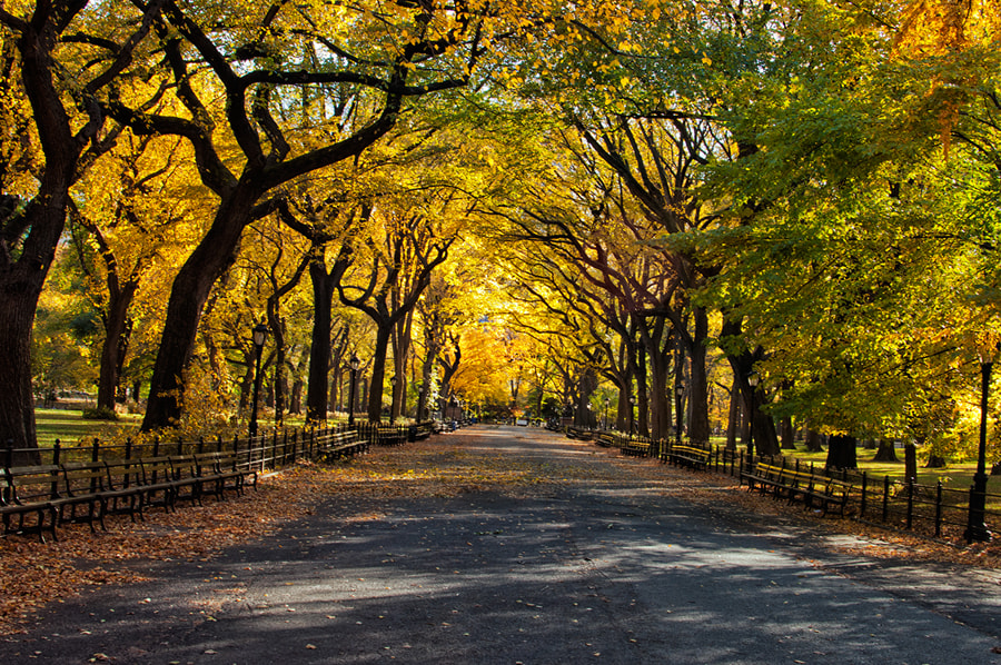 Photograph The Mall, New York City by Sudarshan Mondal on 500px